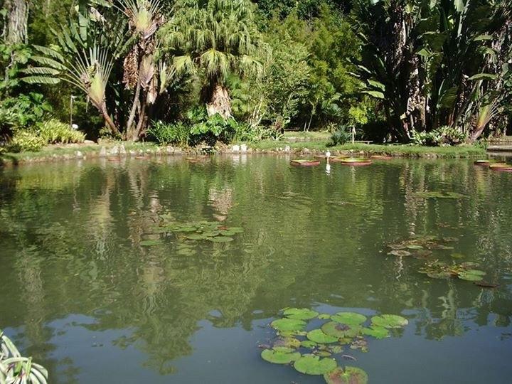 Jardim Botânico do Rio: o principal do País - Divulgação/JBRJ