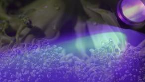 Reator utiliza luz ultravioleta para descontaminar vegetais