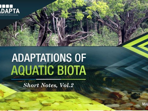 INCT Adaptações da biota aquática da Amazônia lança publicação com resultados de pesquisas