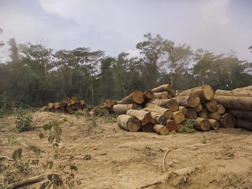 Sustentabilidade da agricultura na Amazônia – Armazenamento de carbono como alternativa para áreas f