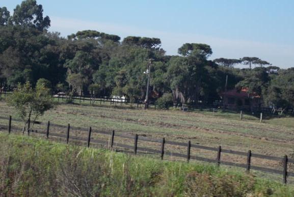 Estudo feito nos Estados Unidos mostrou que o número total de árvores no planeta caiu 46%Fábio Massalli/Agência Brasil