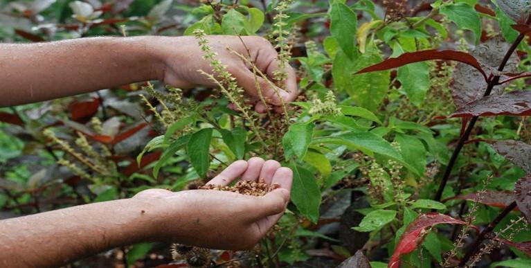 Entre as medidas previstas estão o aumento da produção de plantas medicinais e fitoterápicas Divulgação/Governo do Espírito Santo