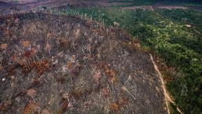 Ação conjunta no TCU pede conclusão da auditoria nas políticas de combate ao desmatamento