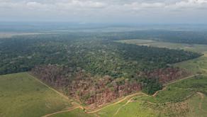 Metade dos deputados que aprovaram redução de áreas protegidas em RO são pecuaristas ou foram financ