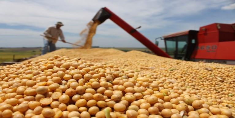 A soja foi uma das cinco cadeias produtivas responsáveis por 84% do total exportado pelo agronegócio em julho Valter Campanato