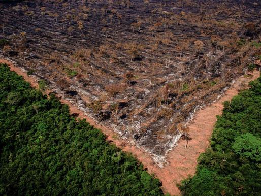 No Dia do Meio Ambiente, senadores explicamguinadade Bolsonaro na área