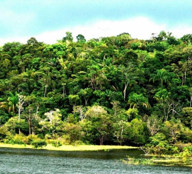 Pesquisas são desenvolvidas a partir de substâncias bioativas isoladas em mais de 15 espécies de plantas da região amazônica Divulgação/Governo do Tocantins