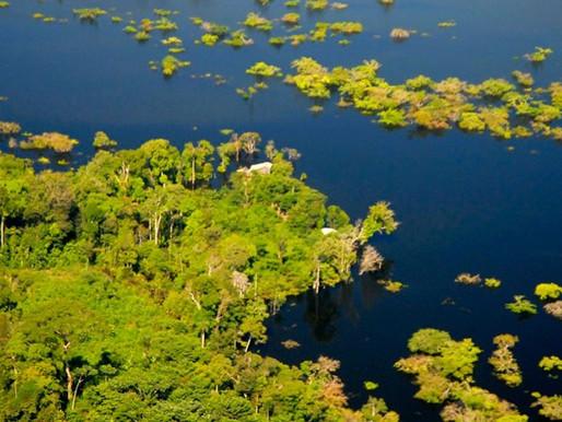 Pesquisa investiga como acontecem emissões de metano em florestas alagáveis da Amazônia