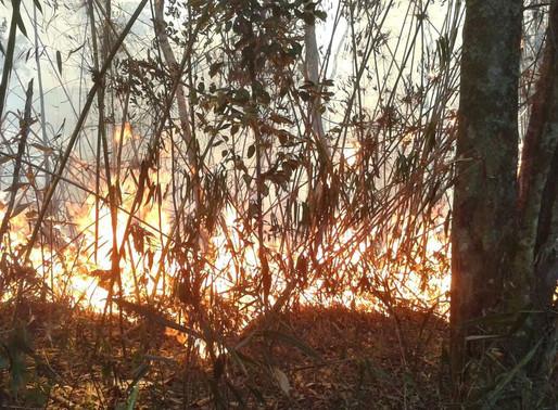 Bombeiros combatem fogo na Serra dos Órgãos pelo terceiro dia seguido