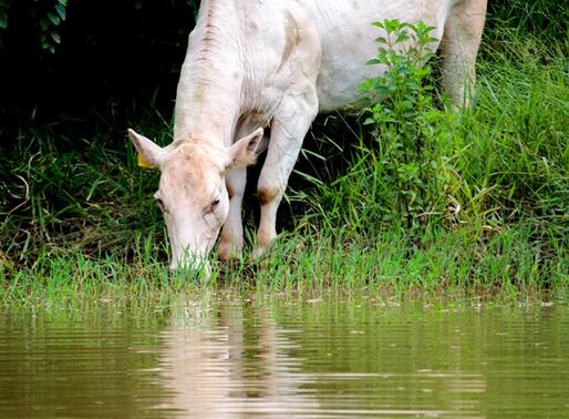 Mudanças climáticas impactam na disponibilidade de água na agropecuária