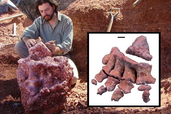 Paleontólogo Bernardo Gonzalez Riga descobriu uma nova espécie entre os maiores dinossauros conhecidos pela ciênciaEPA/Prensa Conicet/Handout/Agência Lusa