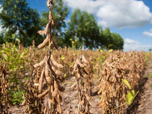 Aplicativo calcula em segundos as necessidades nutricionais da lavoura de soja