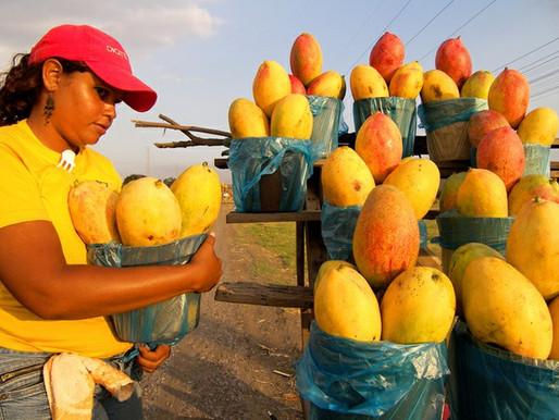 CNPq destinará R$ 10,7 milhões a projetos de agroecologia e produção de alimentos