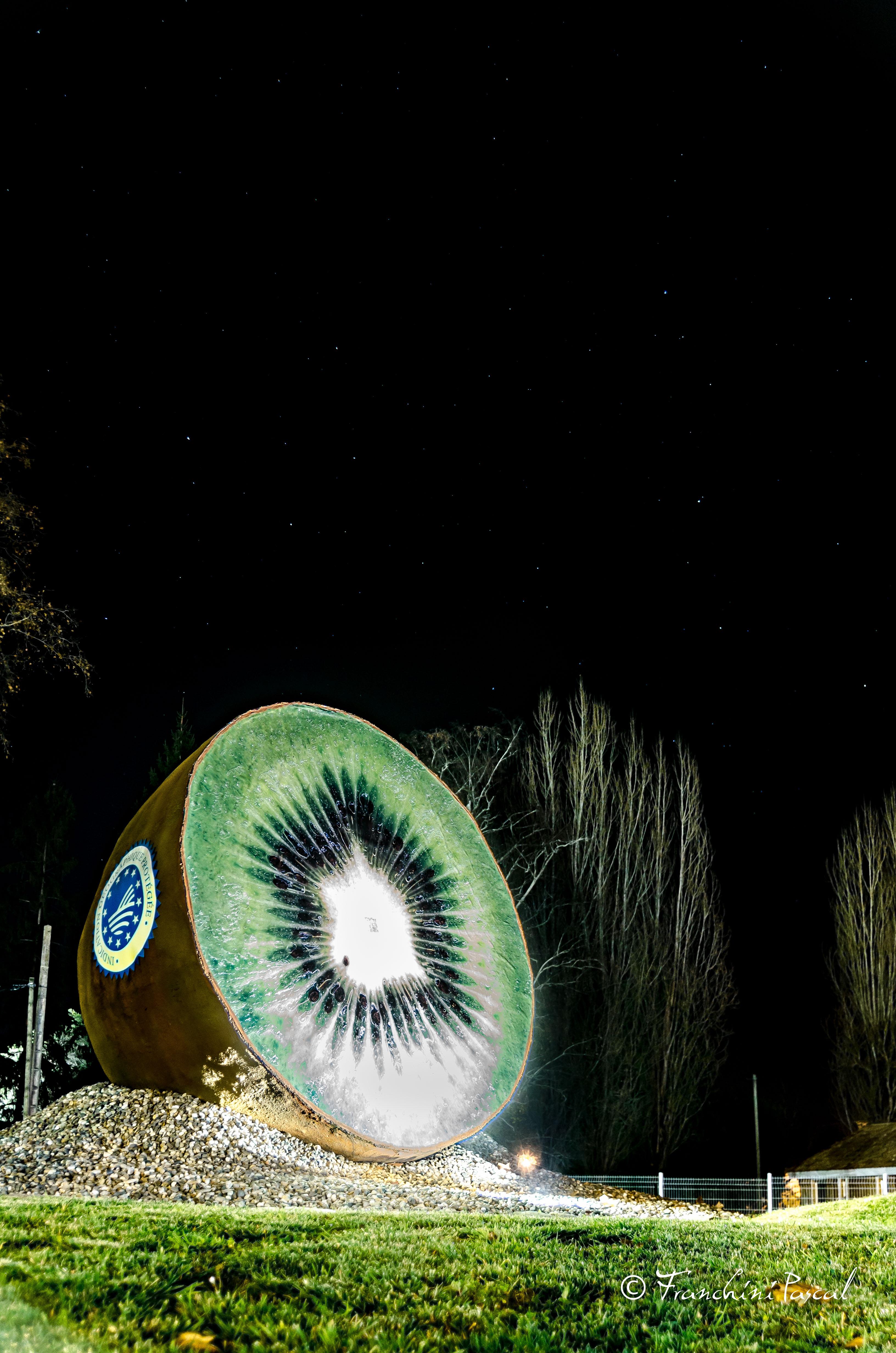 Kiwi géant de peyrehorade