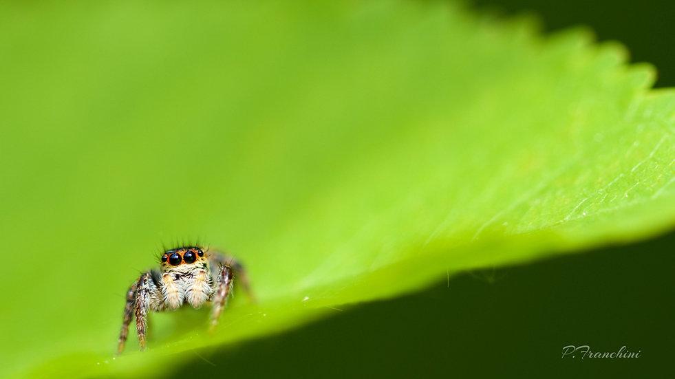 oncle Joe la petite araignée