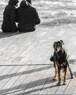Hossegor-chien