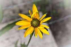 fleurs-landes