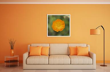 mockup-fleur-orange copie.png
