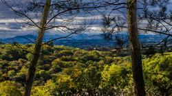 forêt-peyrehoradejpg