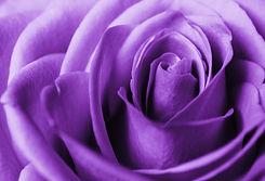 Purple_1.jpg