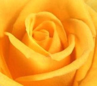 YELLOW ROSE RETREAT