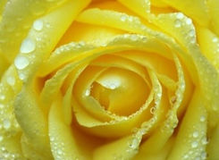 Yellow%2520New_edited_edited.jpg