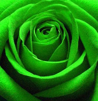 GREEN ROSE RETREAT