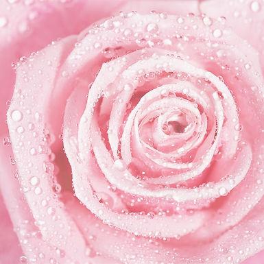 PINK ROSE RETREAT