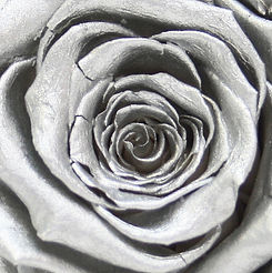 Silver_Rose_edited.jpg