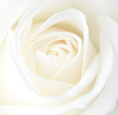 WHITE ROSE RETREAT