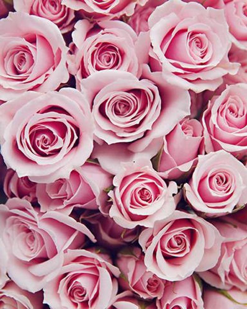FémInité de Rose