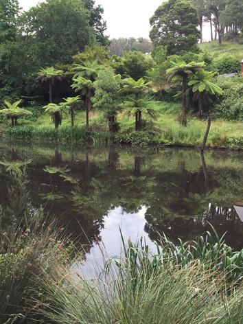 Walk No. 1: Pond with ducks on Mt Eirene Rd