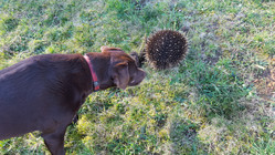 Lola and the echidna