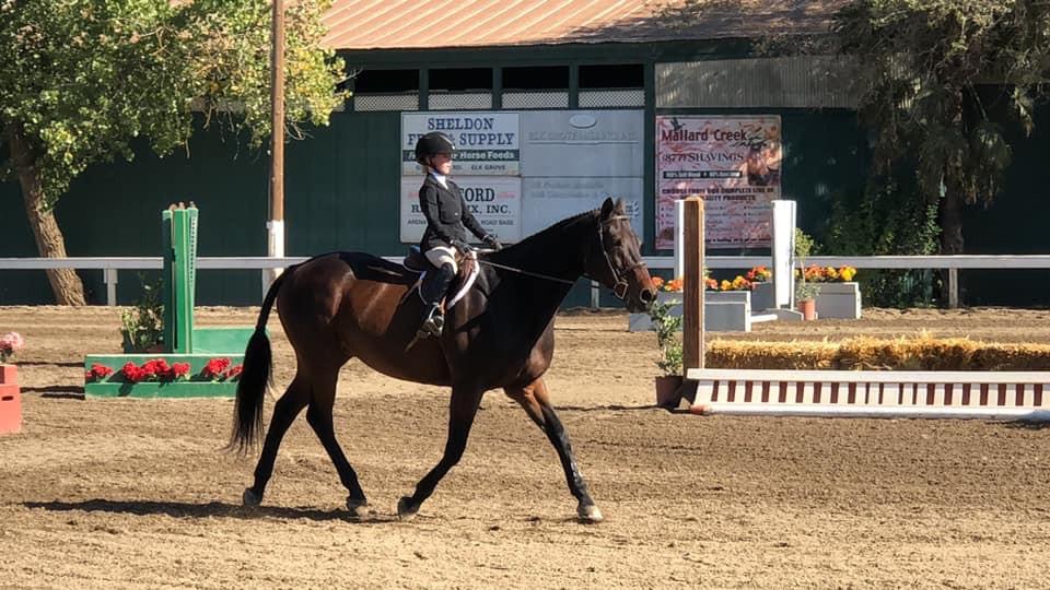 Blue Water Farms Rescue CA Buy a horse near me