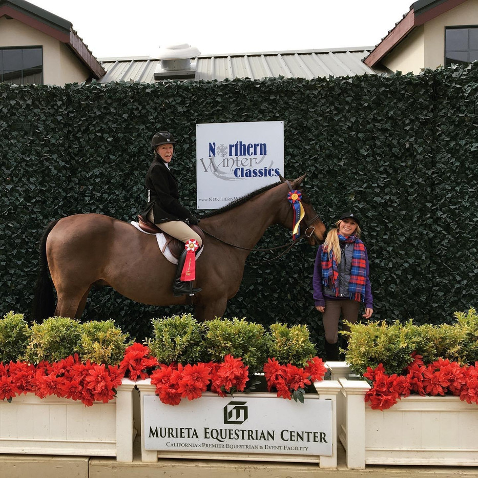 Blue Water Farms Rescue CA Purchase a trained horse