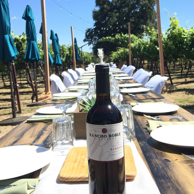Rancho Roble Wine Bottle in the Vineyard