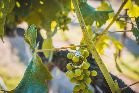 Rancho Roble Best Wedding Sites with Vineyards