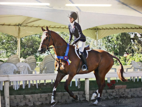 Blue Water Farms Rescue CA Horse Riding Competitive Lessons