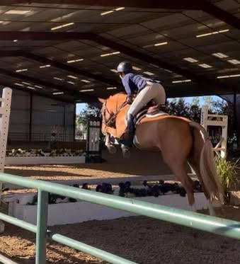 Blue Water Farms Rescue CA Trained Pony for sale near me