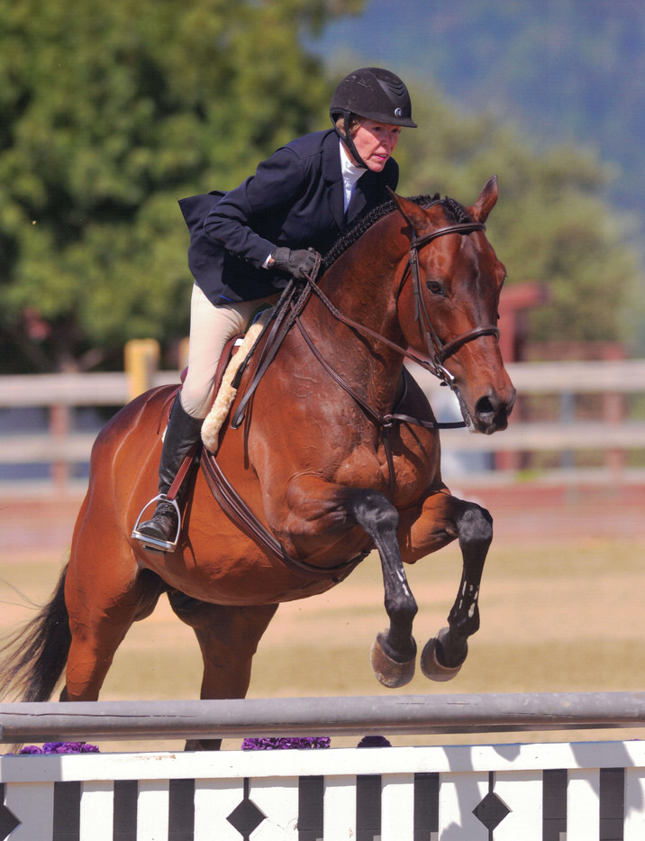 Blue Water Farms Rescue CA Trained Horse for sale