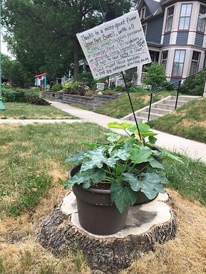 Dayton Avenue Stump Garden