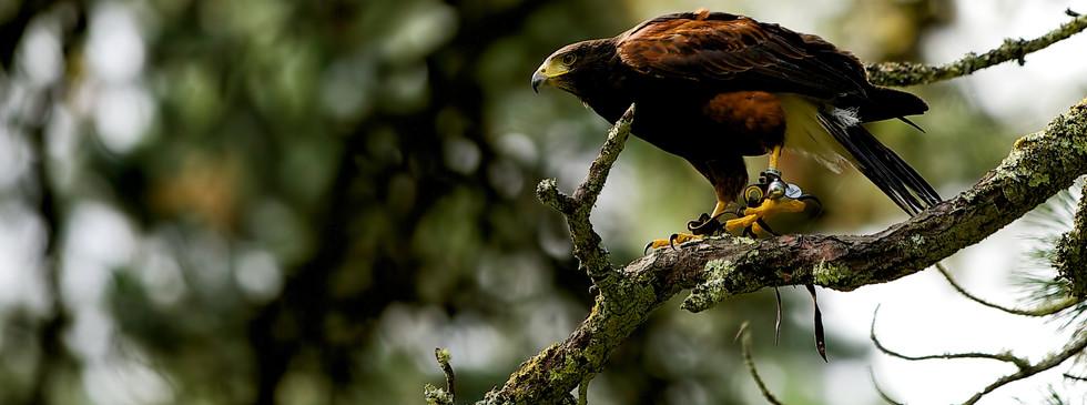 florida-wildlife-photographers-005.jpg
