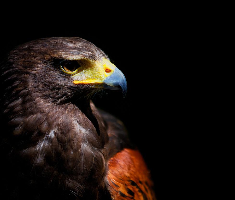 florida-wildlife-photographers-004.jpg