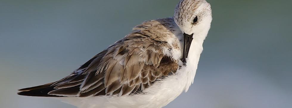 florida-wildlife-photographers-008.jpg