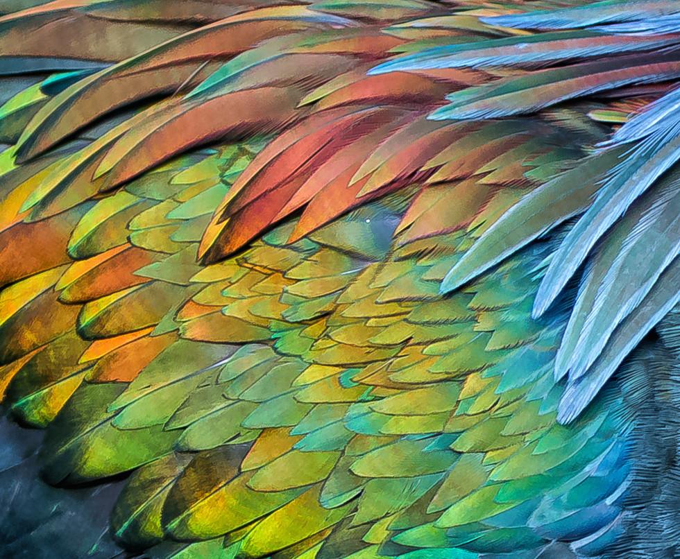 florida-wildlife-photographers-007.jpg