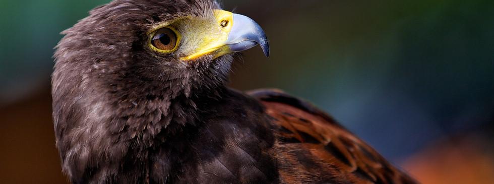 florida-wildlife-photographers-006.jpg