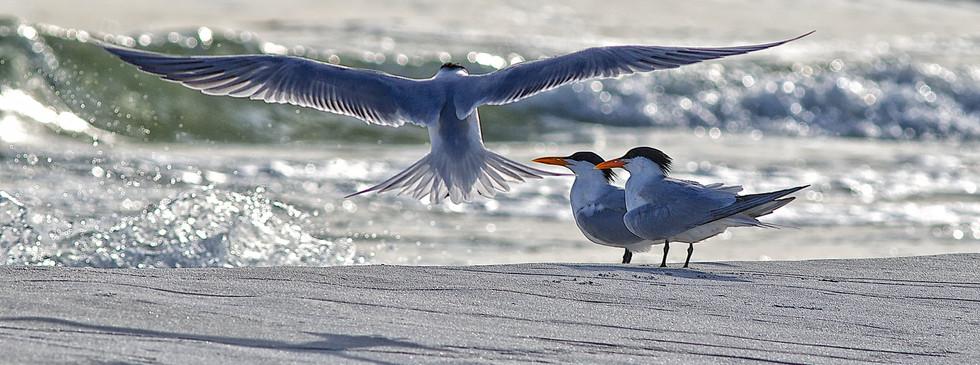 florida-wildlife-photographers-010.jpg