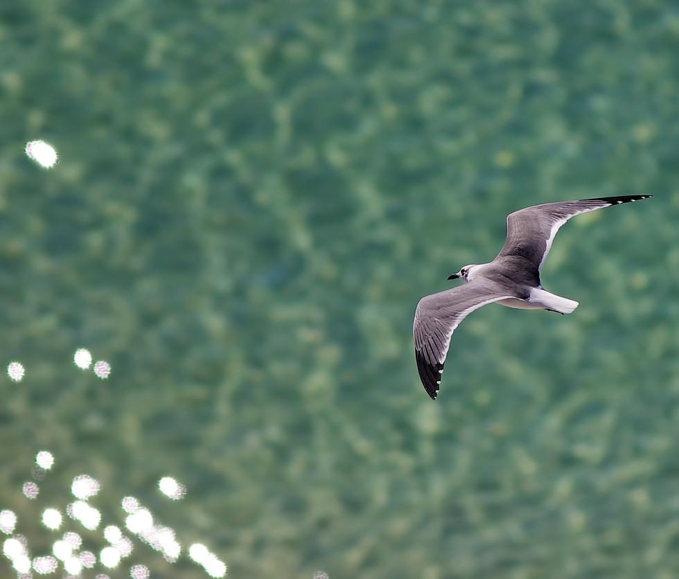 nw-florida-photographers-002.jpg