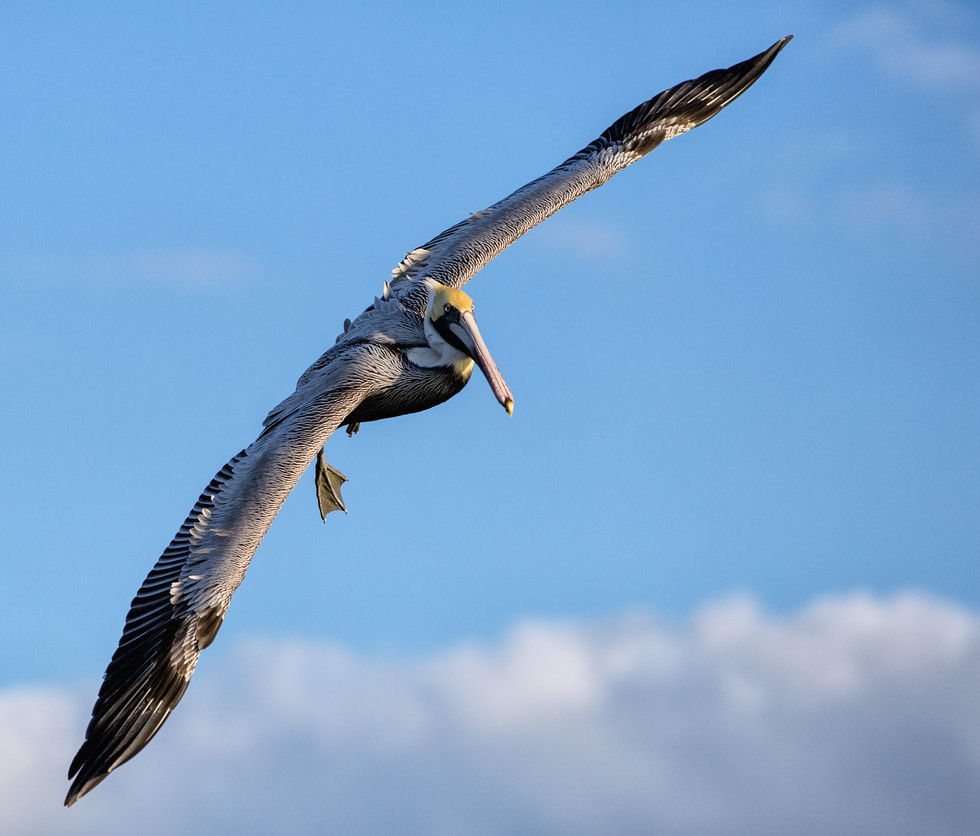 florida-nature-photographers-005.jpg