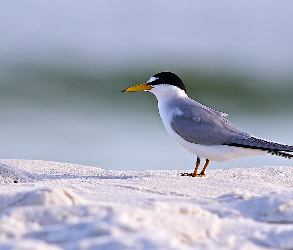 florida-wildlife-photographers-009.jpg